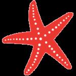 StarfishPreSchoolIcon